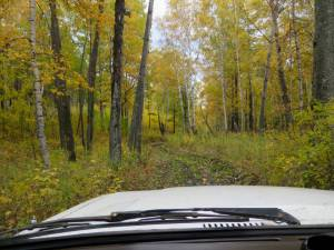 through the woods, a fun ride with a 4WD