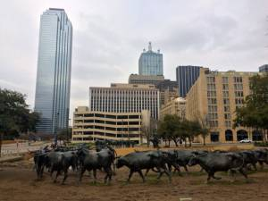 Pioneer Plaza, a bronze cattle drive in front of glass skyscrapers