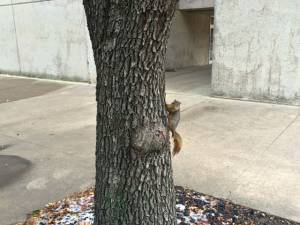 the obligatory squirrel