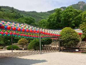 lanterns for buddhas birthday