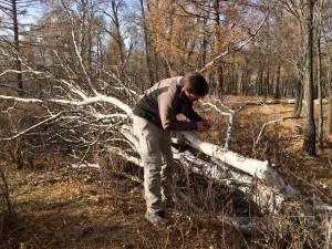 birchbark for making fire