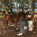 horse caught in the act...