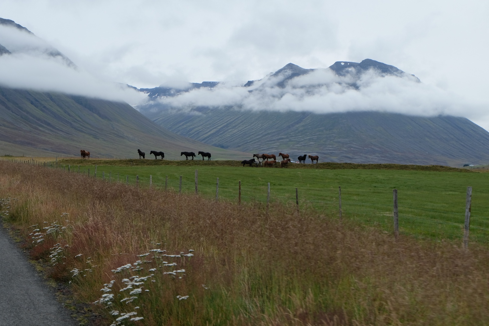 Line of horses along the road