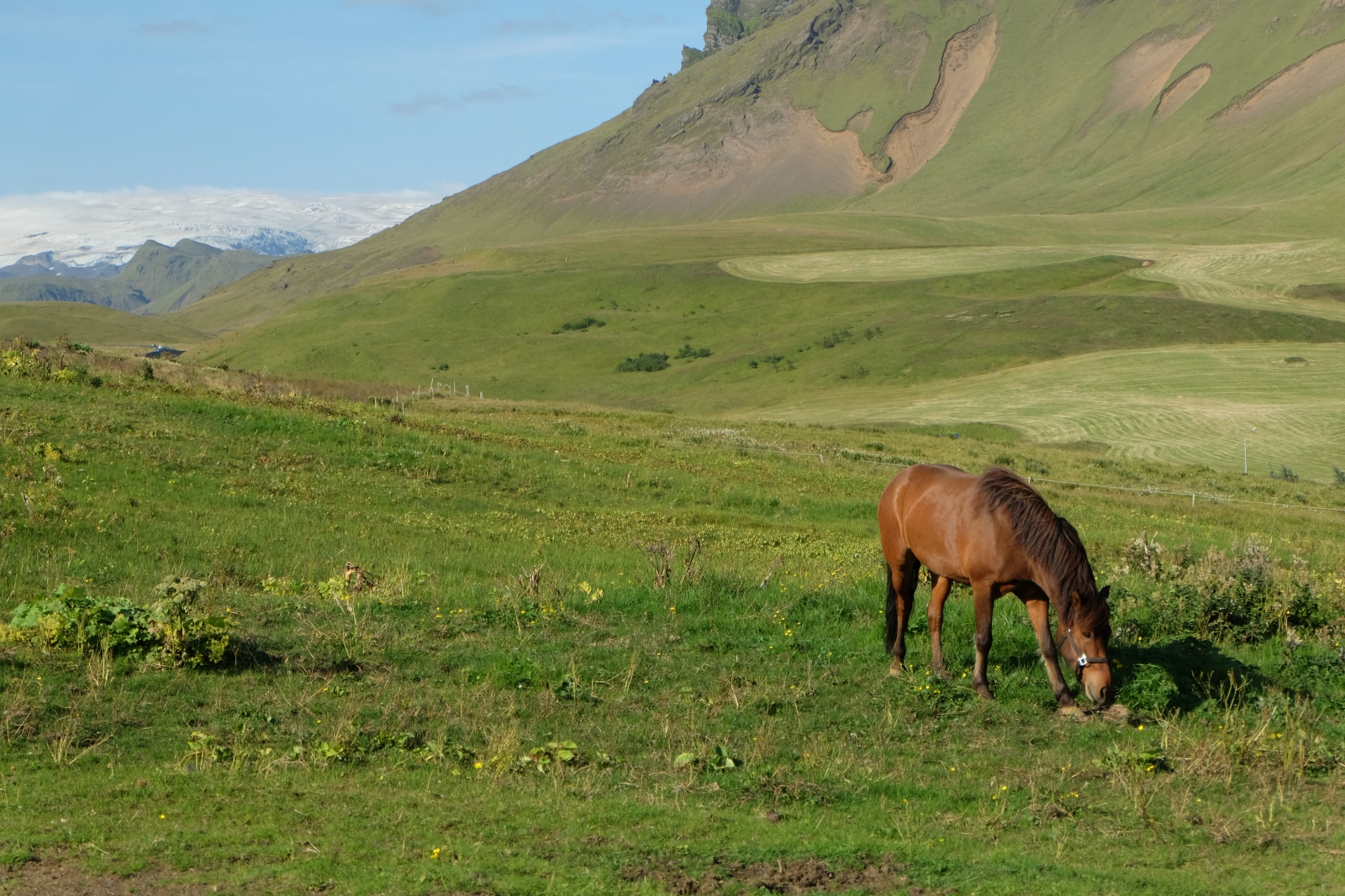 Picture of a Horse Hike around Vik, Iceland