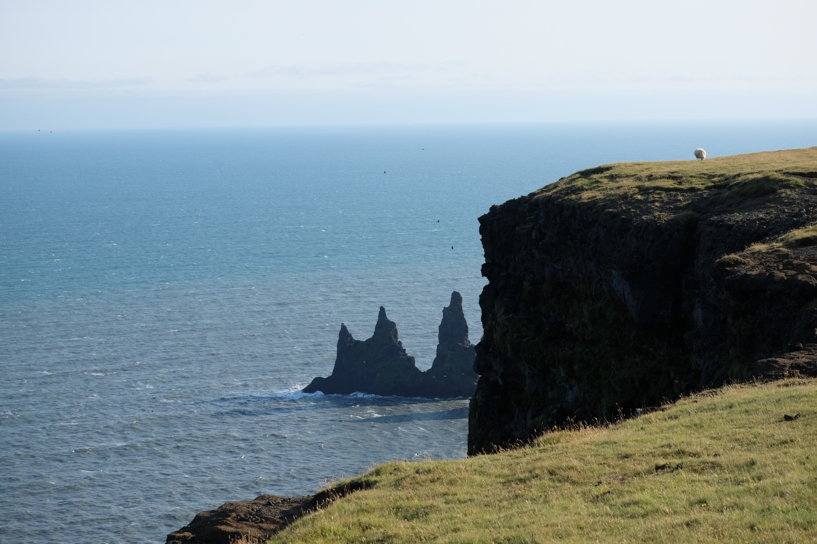 Cliffs, Hike around Vik - on top, Iceland