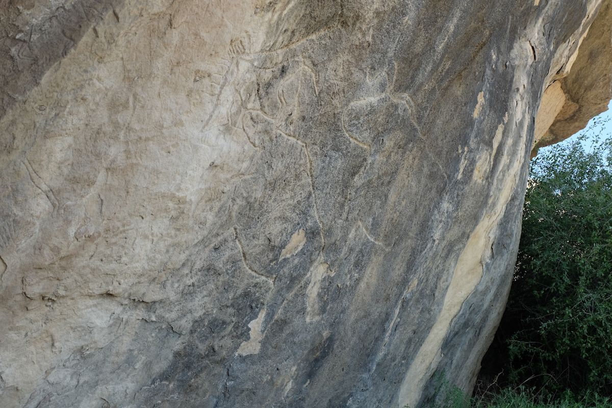 Petroglyph of oxen